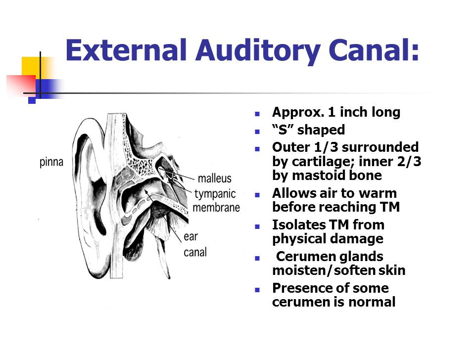 Anatomy And Physiology Of The Ear Ppt Video Online Download