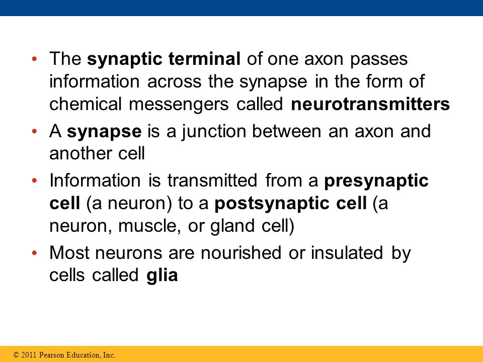 A synapse is a junction between an axon and another cell