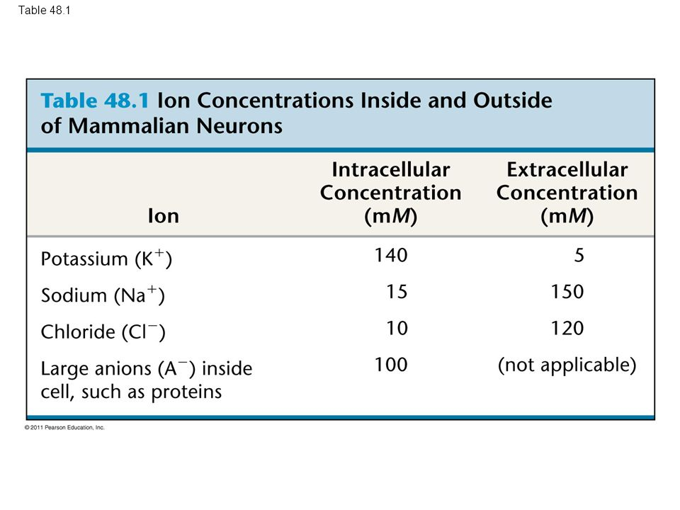 Table 48.1 Table 48.1 Ion Concentrations Inside and Outside of Mammalian Neurons 18