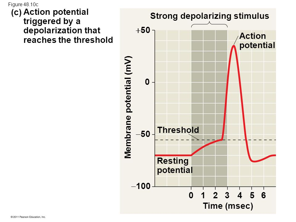 Strong depolarizing stimulus