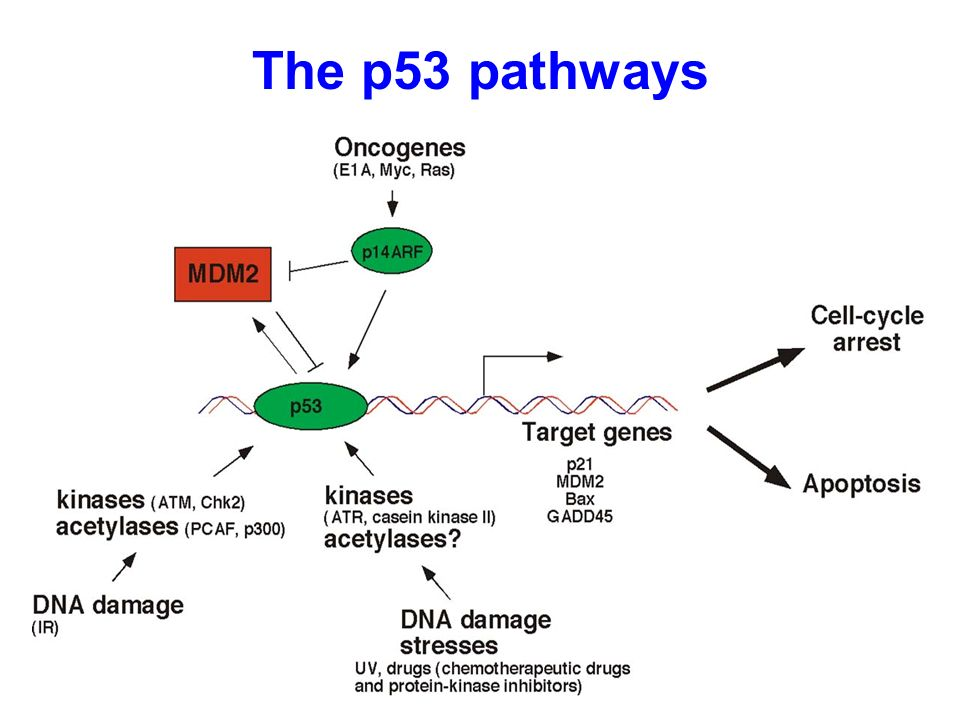 The inflammatory role of phagocyte apoptotic pathways in rheumatic.