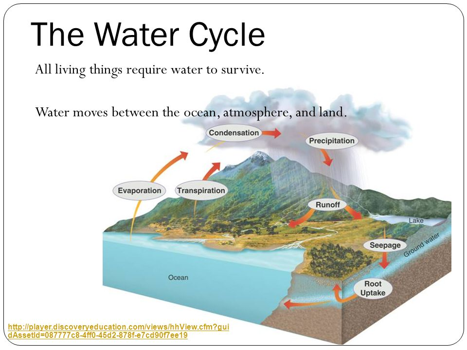 The Water Cycle All living things require water to survive. Water moves between the ocean, atmosphere, and land.
