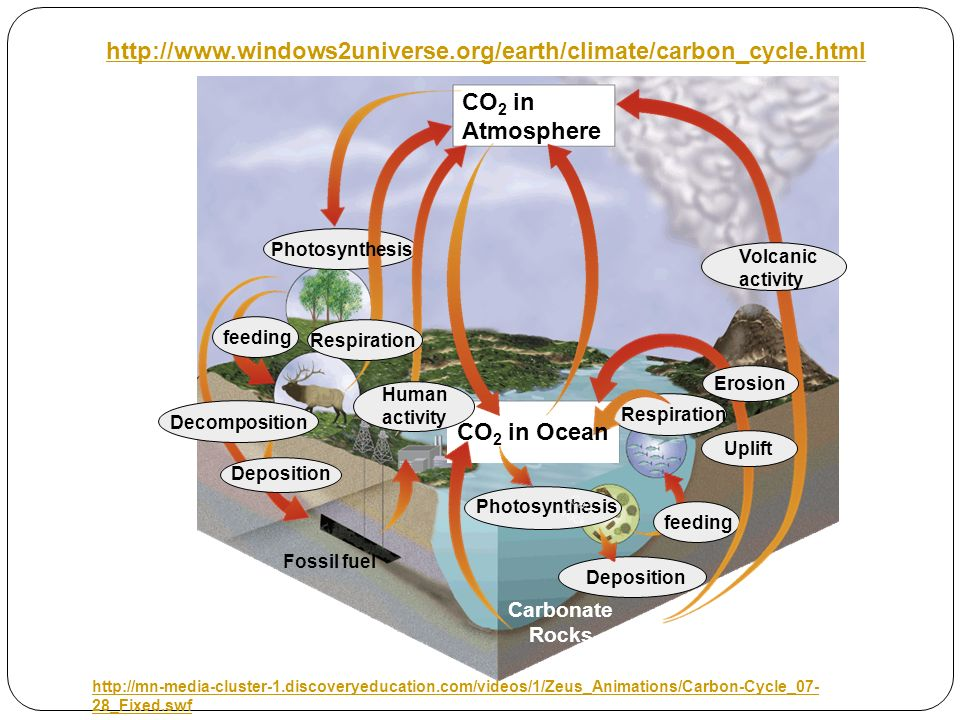 CO2 in Atmosphere. Photosynthesis.