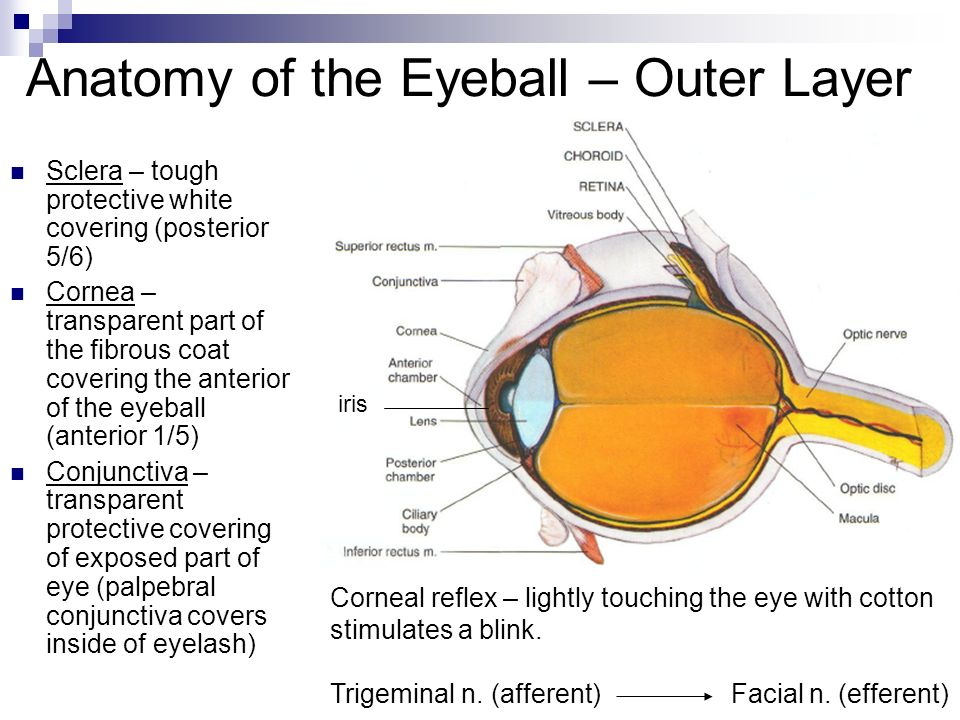Eyes By Orest Kornetsky Ppt Video Online Download