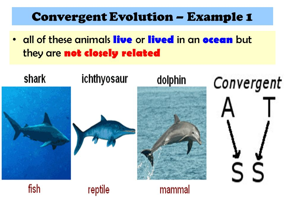 Convergent Evolution Example Choice Image Example Cover Letter For