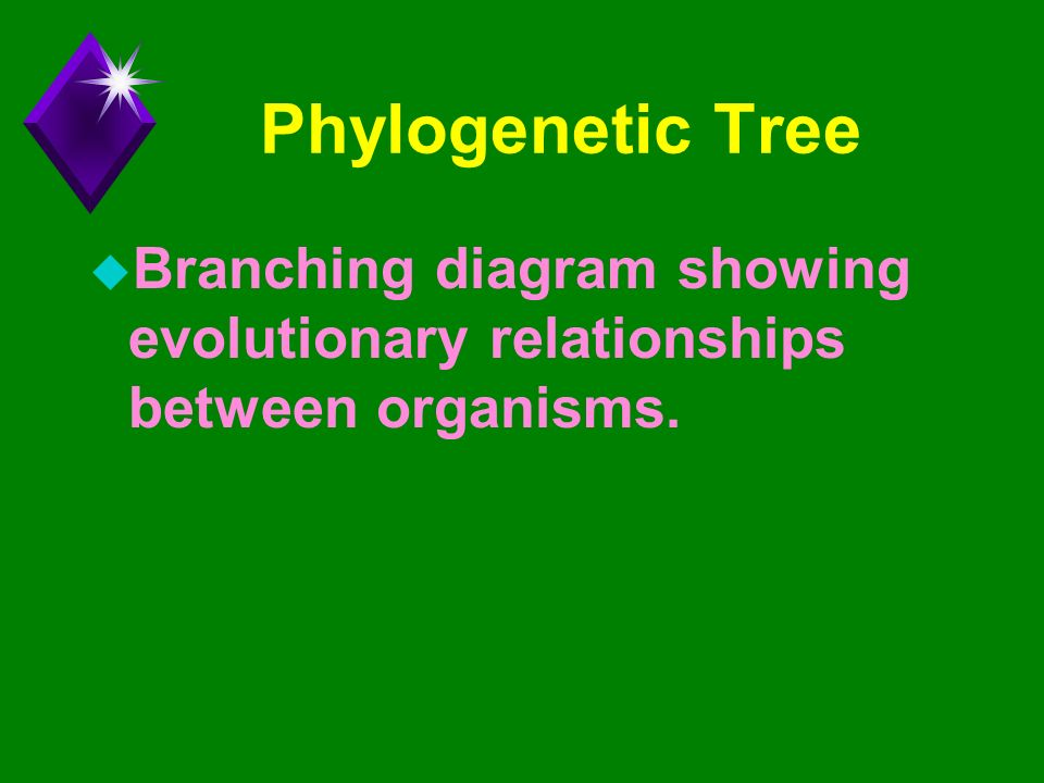 Chapter 26 Phylogeny And The Tree Of Life Ppt Download