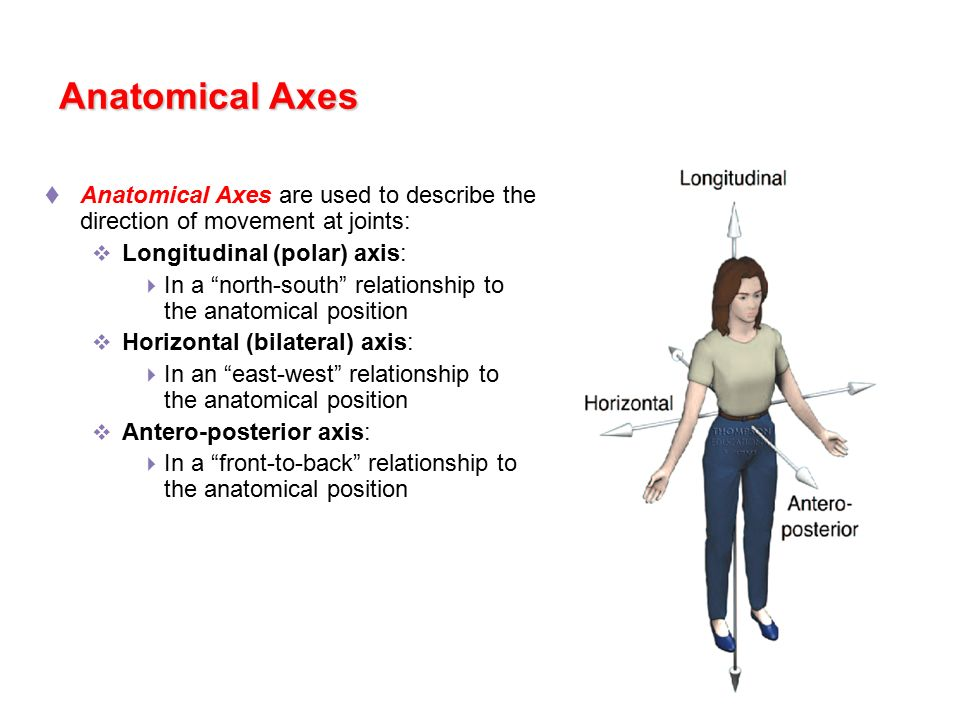 Exercise Science Section 1: The Anatomical Position - ppt video ...