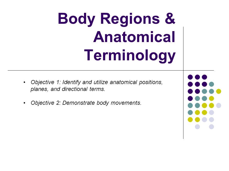 Body Regions & Anatomical Terminology