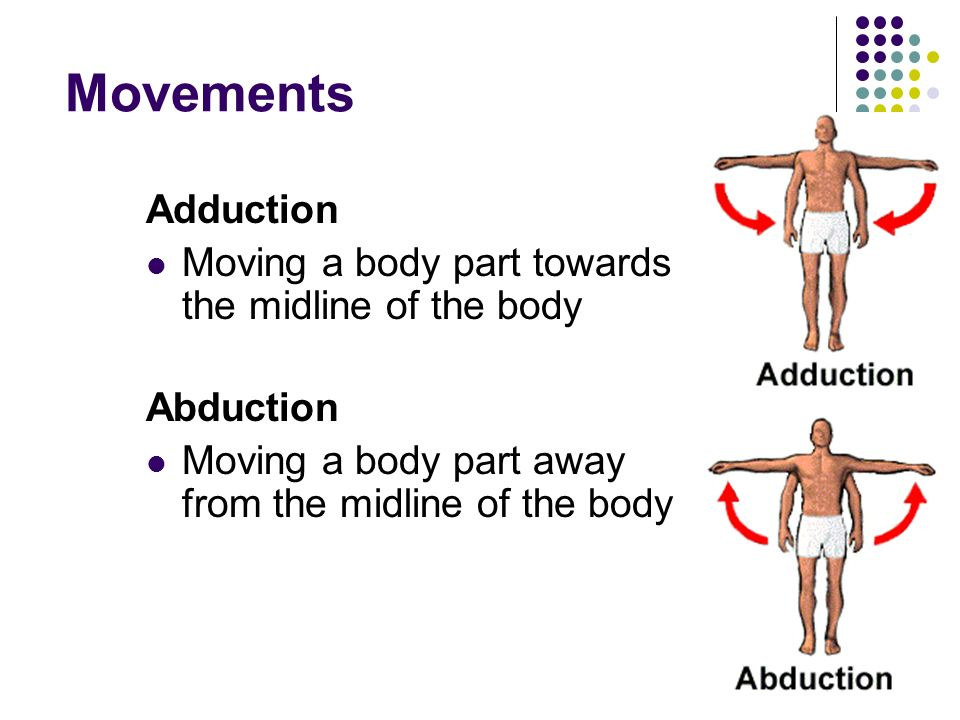 Movements Adduction Moving a body part towards the midline of the body
