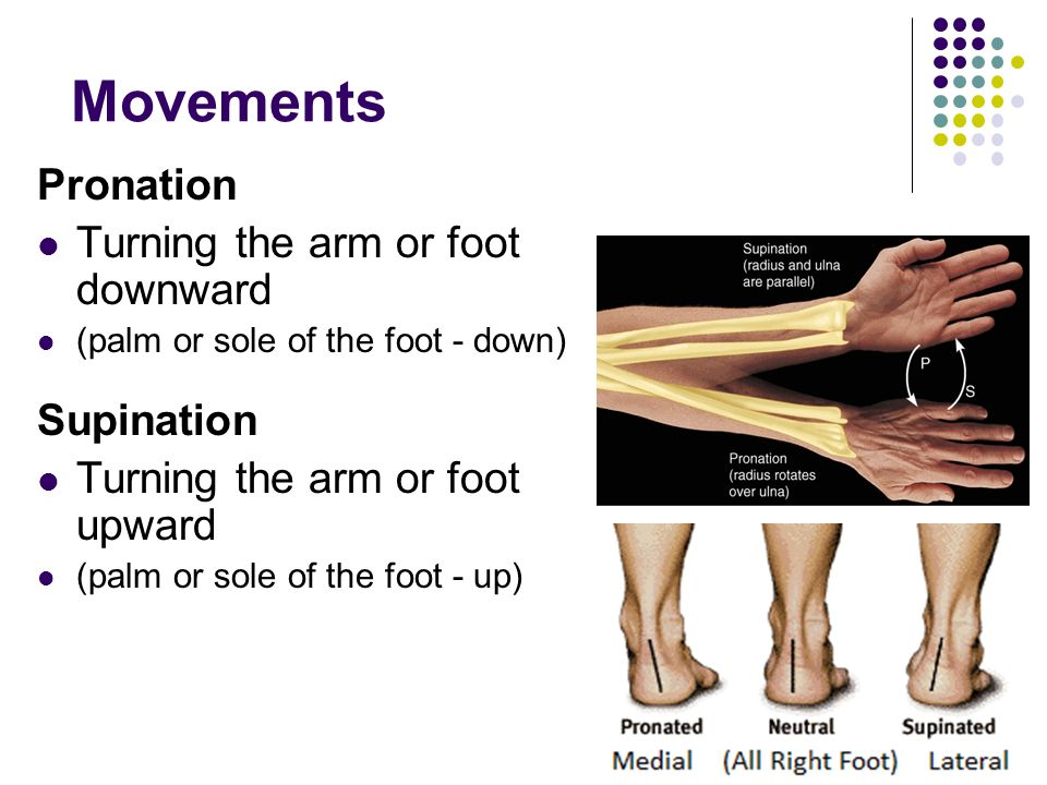 Movements Pronation Turning the arm or foot downward Supination