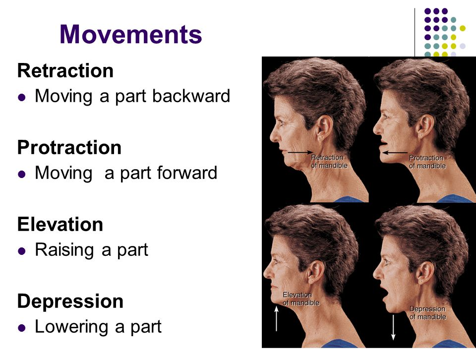Movements Retraction Protraction Elevation Depression