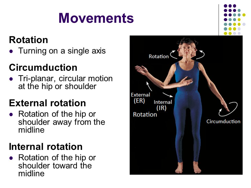 Movements Rotation Circumduction External rotation Internal rotation