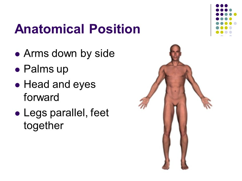 Anatomical Position Arms down by side Palms up Head and eyes forward