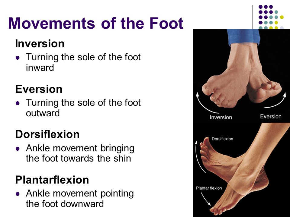 Movements of the Foot Inversion Eversion Dorsiflexion Plantarflexion