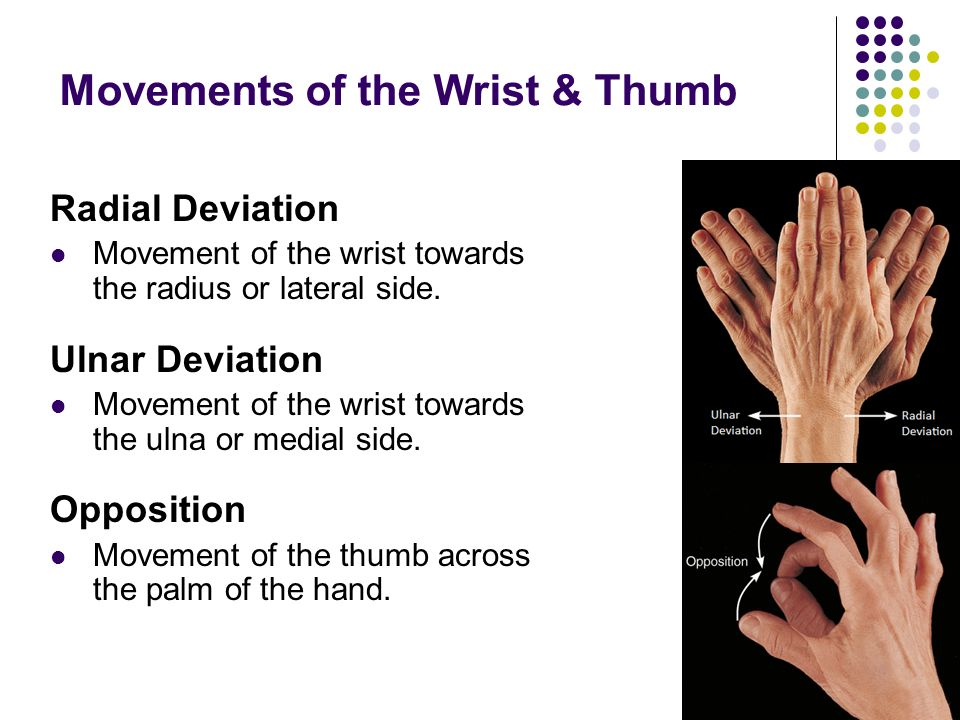 Movements of the Wrist & Thumb