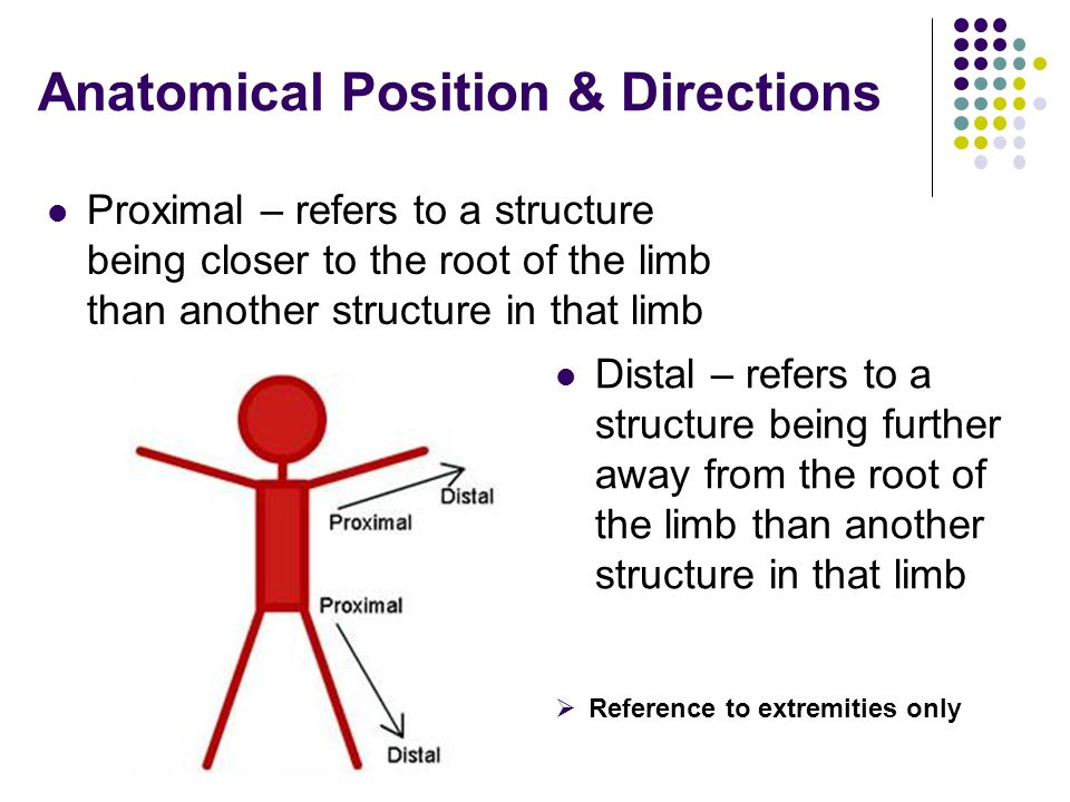 Anatomical Position & Directions