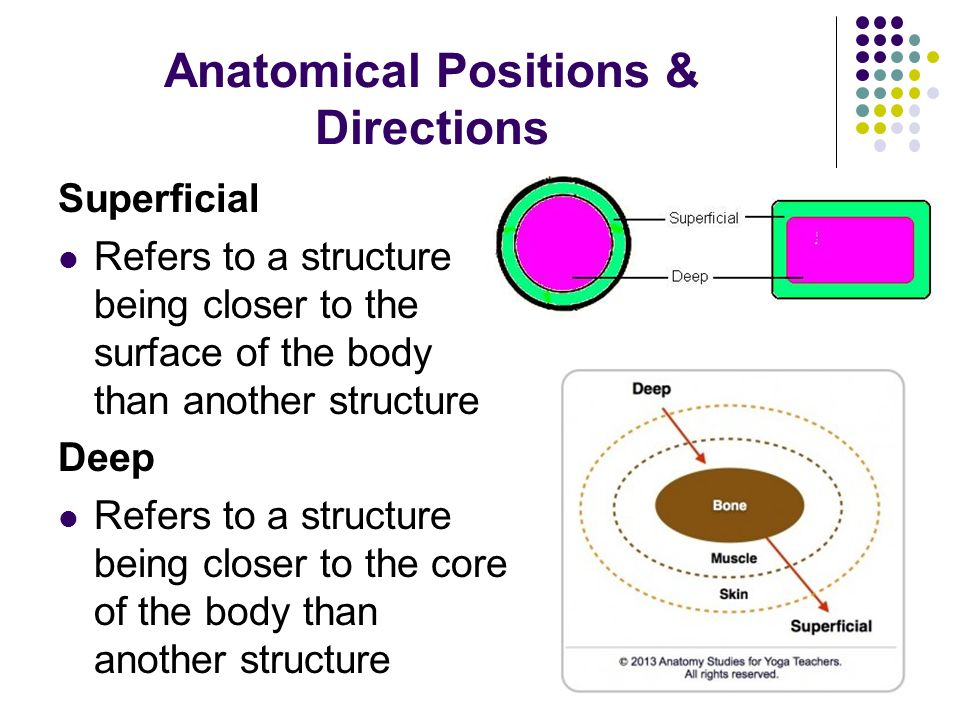 Anatomical Positions & Directions