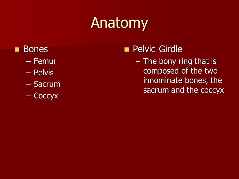 Hip and Pelvis Anatomy Sports Medicine I. - ppt video online download