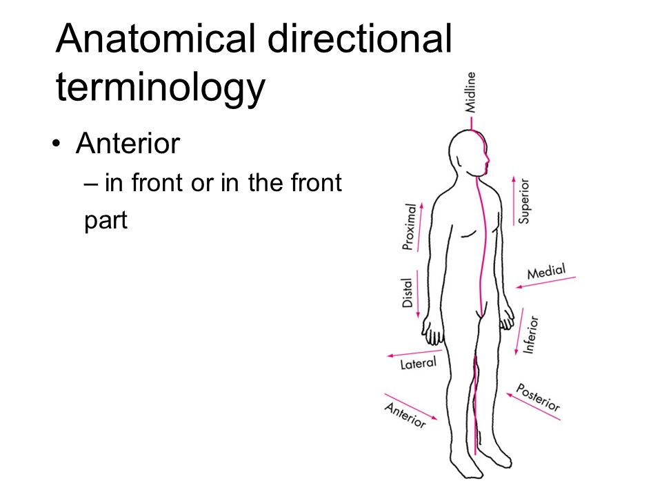 Functional Anatomy and Biomechanics - ppt video online download