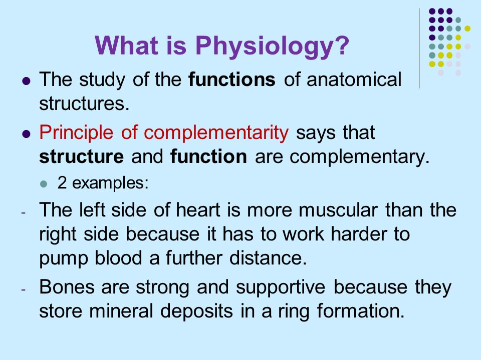 Anatomy & Physiology I BIO Lecture and Lab - ppt video online download