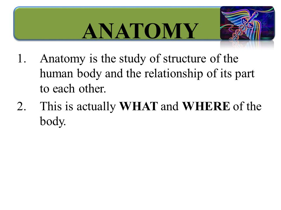 Unique Anatomy Is The Study Of Image Human Anatomy Images