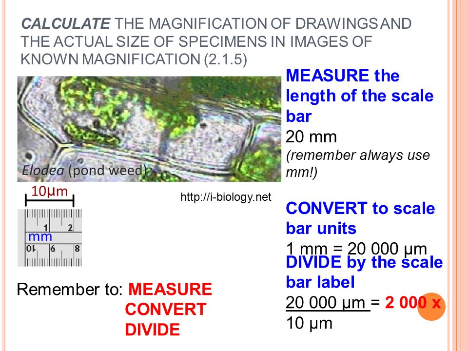 How To Calculate Actual Size Of A Drawing