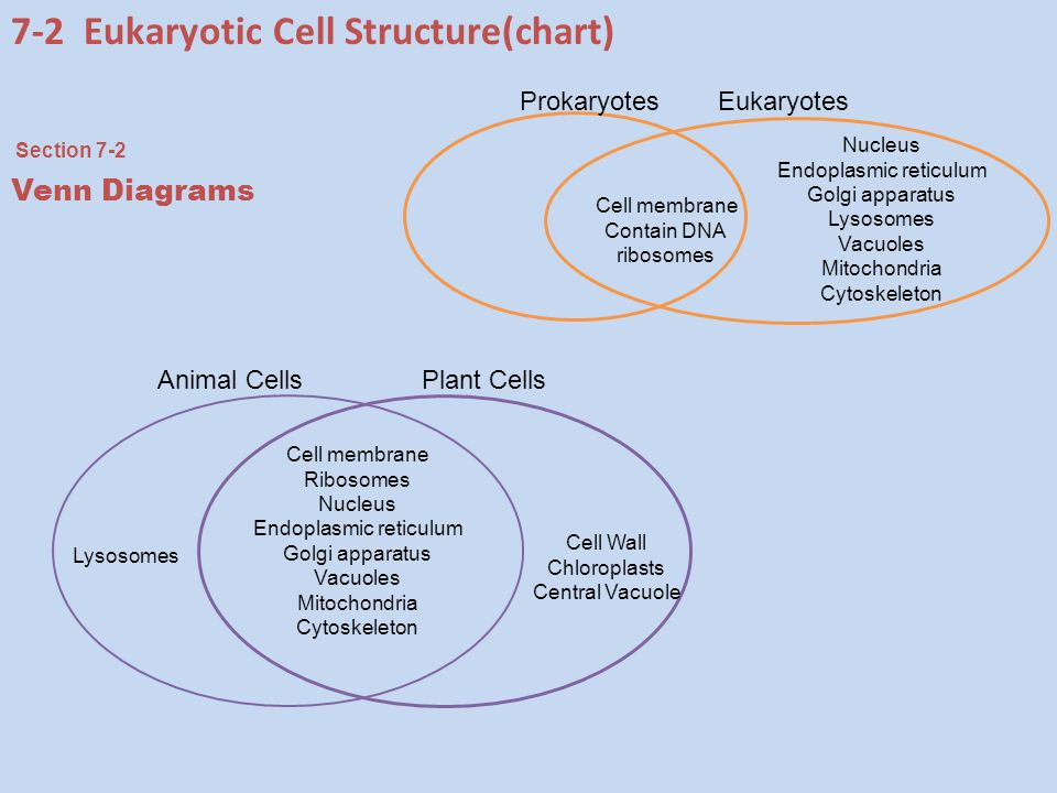 Chapter 7 cell structure and function ppt download 7 2 eukaryotic cell structurechart ccuart