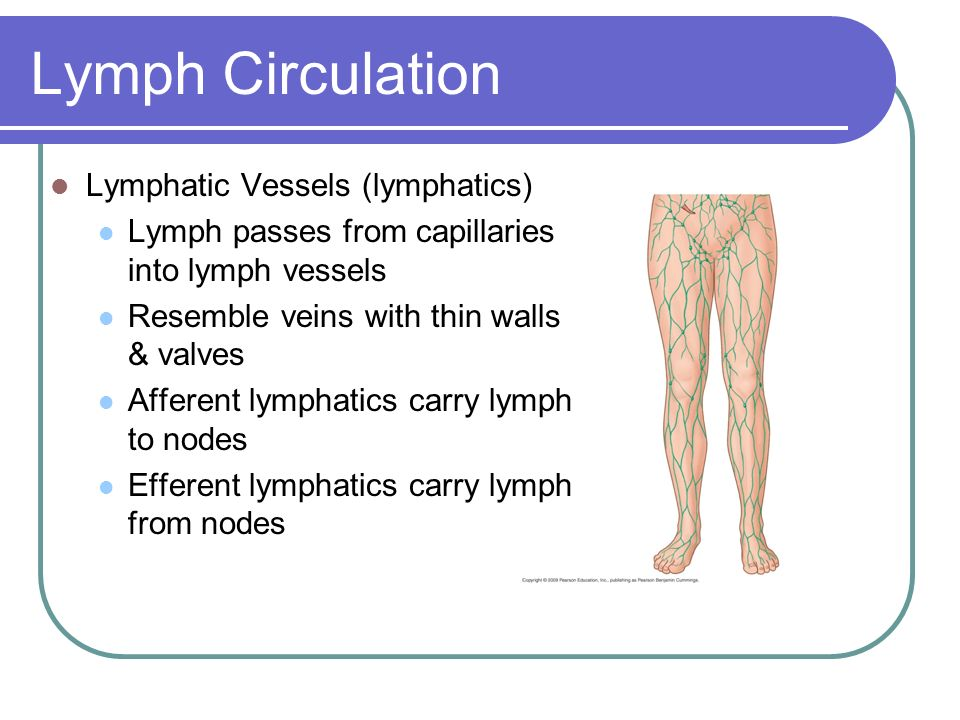 Lymphatic System Tissues Organs Vessels And A Fluid Called Lymph