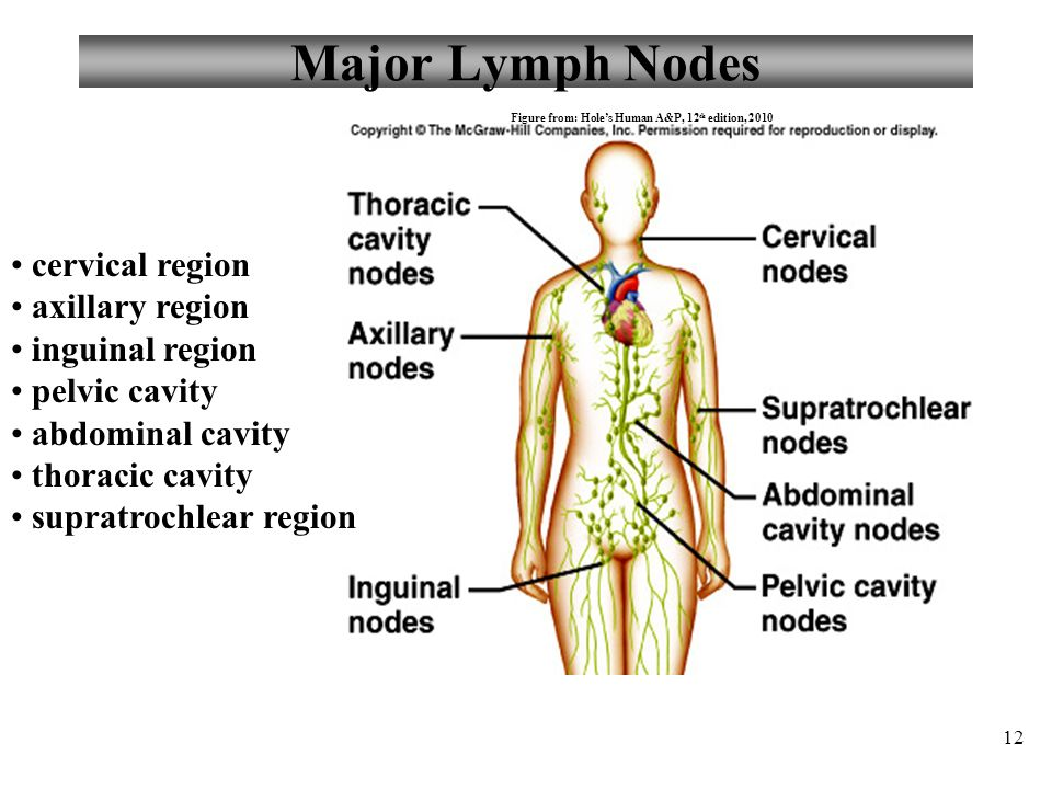 Major Lymph Node Diagram - DIY Enthusiasts Wiring Diagrams •