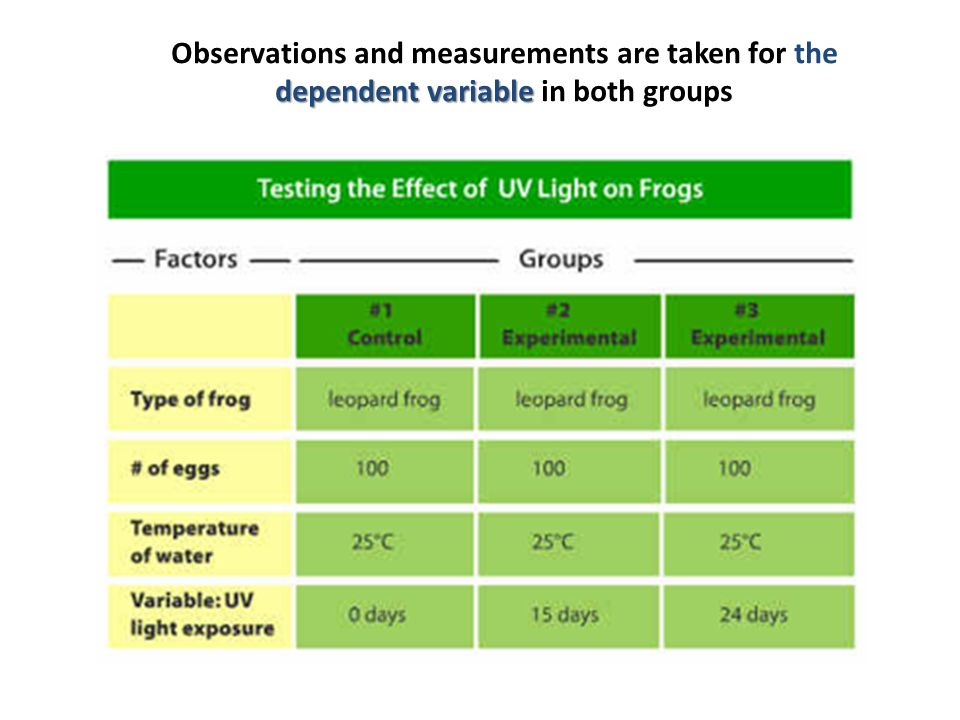 Observations and measurements are taken for the dependent variable in both groups