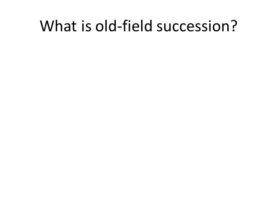 What is old-field succession