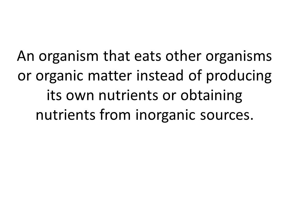 An organism that eats other organisms or organic matter instead of producing its own nutrients or obtaining nutrients from inorganic sources.