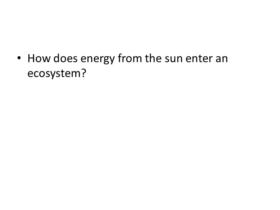 How does energy from the sun enter an ecosystem