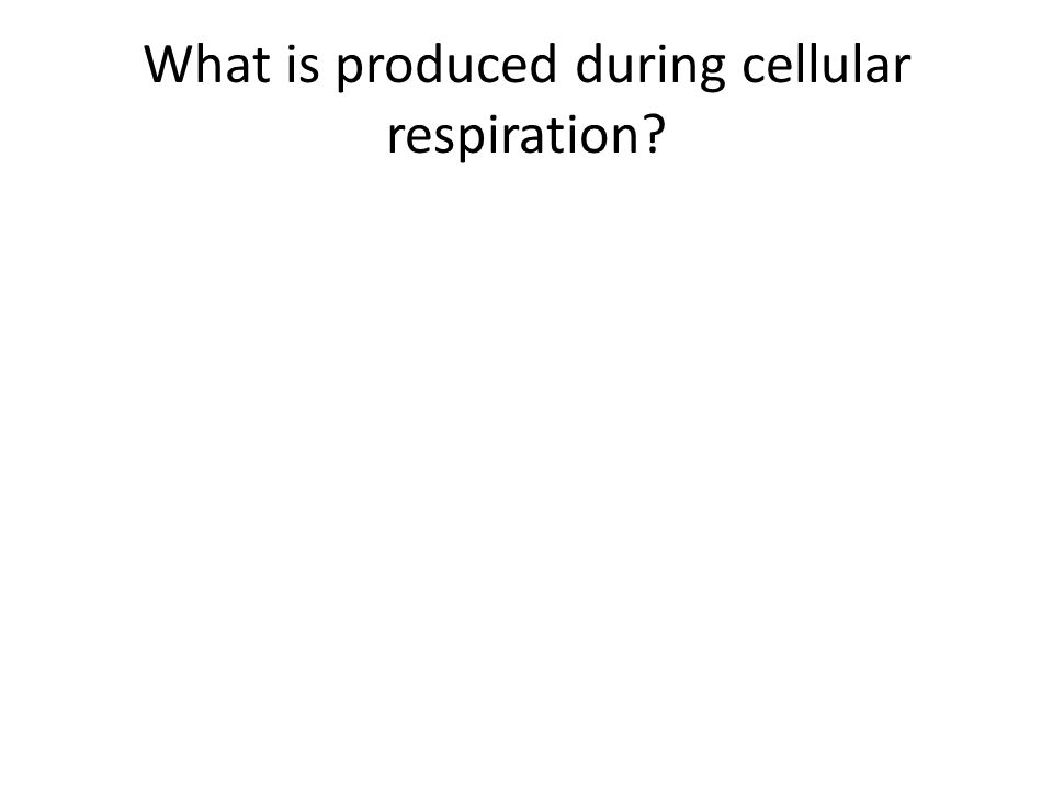 What is produced during cellular respiration