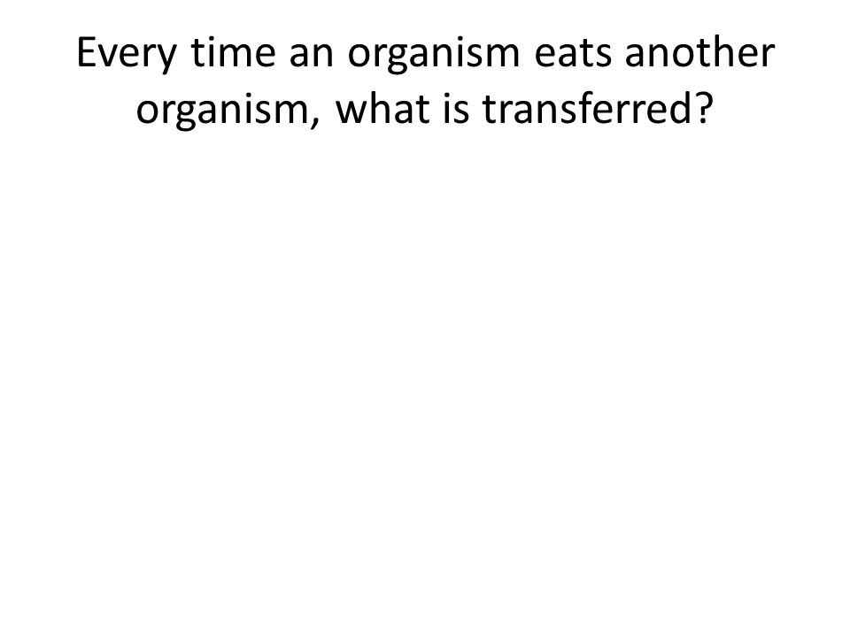 Every time an organism eats another organism, what is transferred