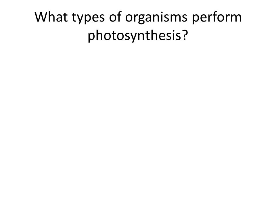 What types of organisms perform photosynthesis