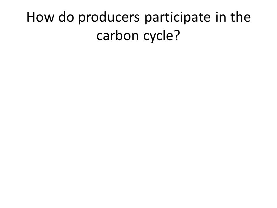 How do producers participate in the carbon cycle