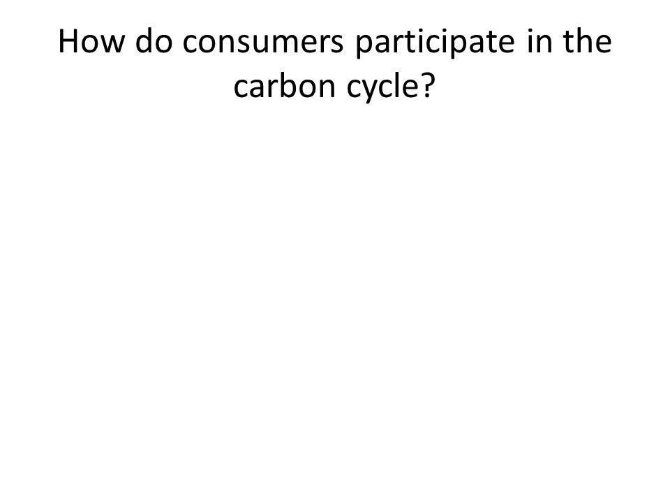 How do consumers participate in the carbon cycle