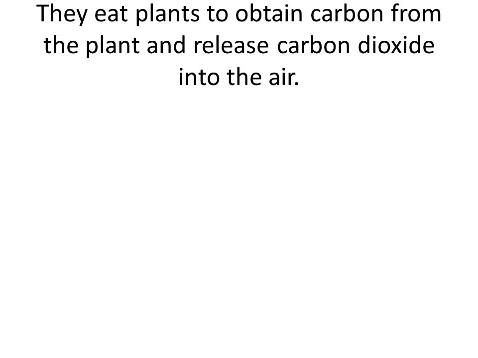They eat plants to obtain carbon from the plant and release carbon dioxide into the air.