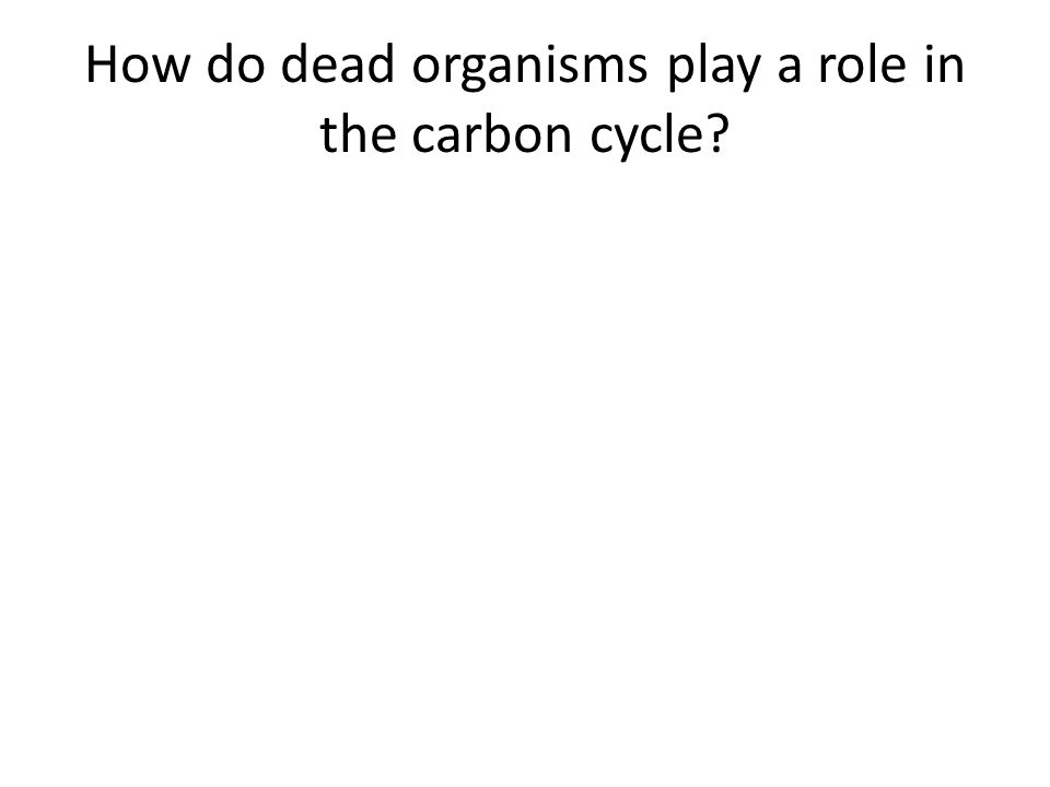 How do dead organisms play a role in the carbon cycle