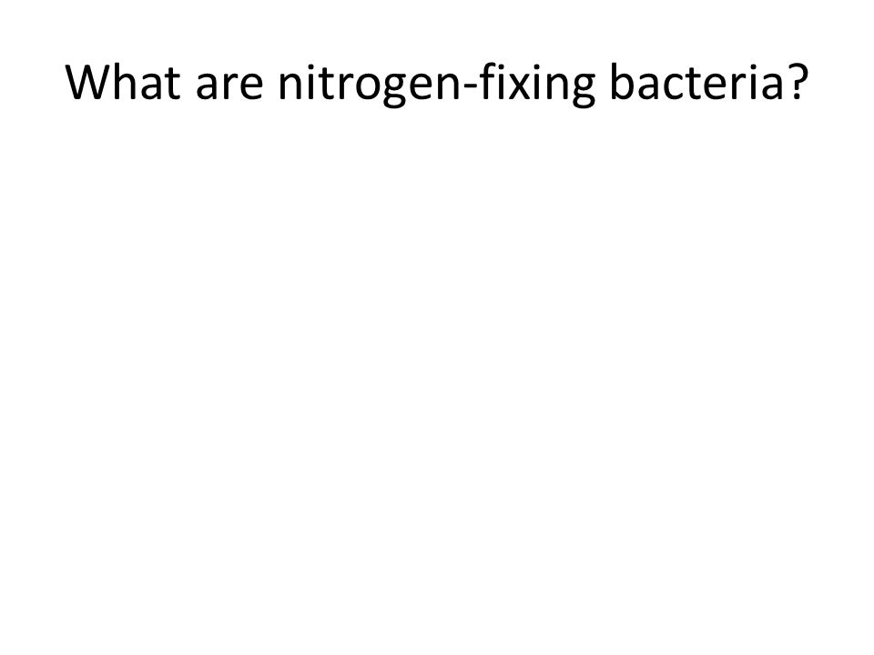 What are nitrogen-fixing bacteria