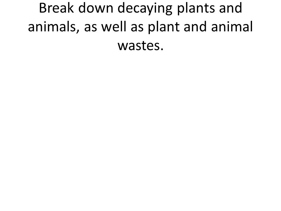 Break down decaying plants and animals, as well as plant and animal wastes.