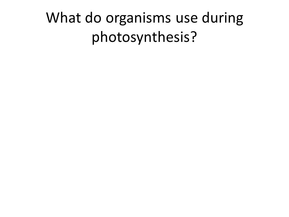 What do organisms use during photosynthesis