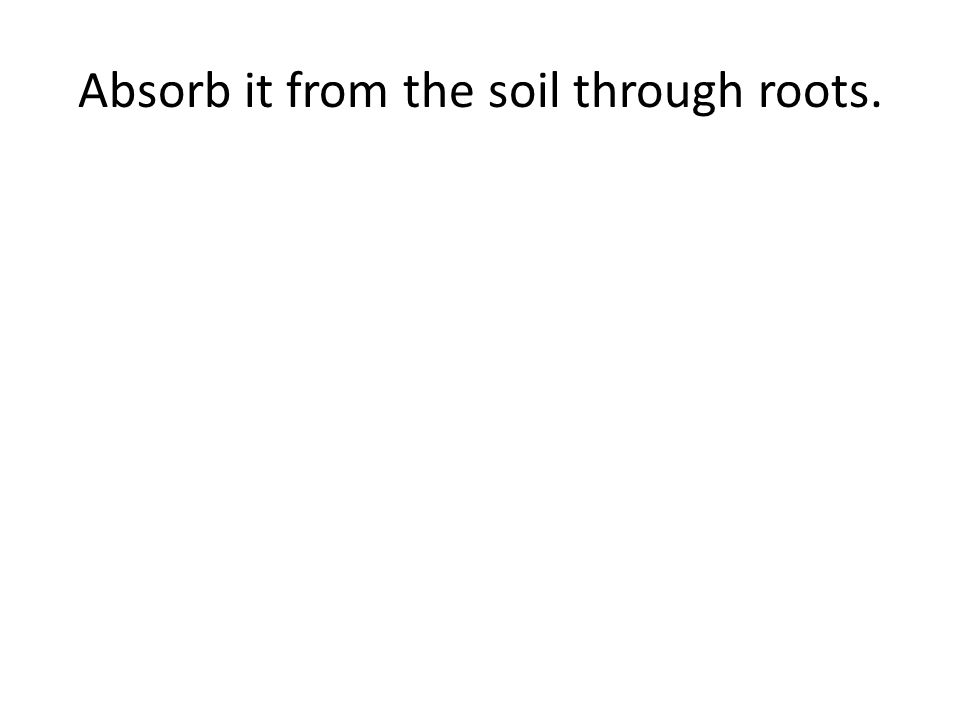 Absorb it from the soil through roots.