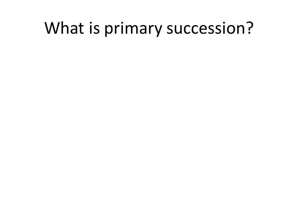 What is primary succession