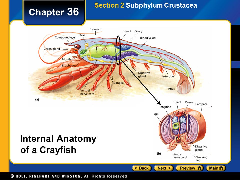 Chapter 36 Table Of Contents Section 1 Phylum Arthropoda Ppt Video