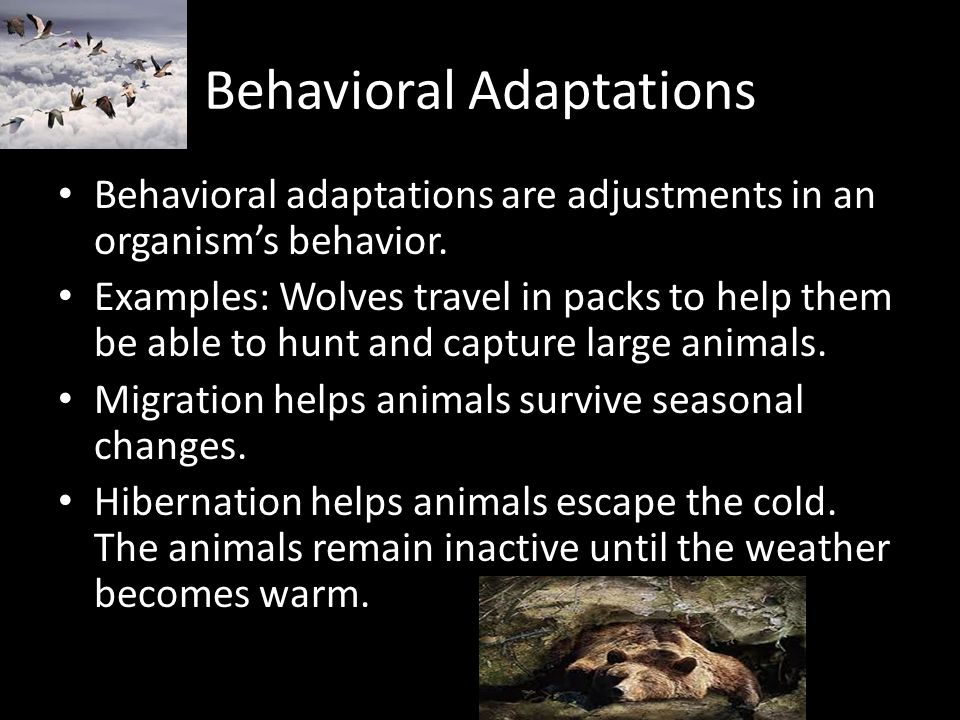 Adaptation And Survival Ppt Video Online Download