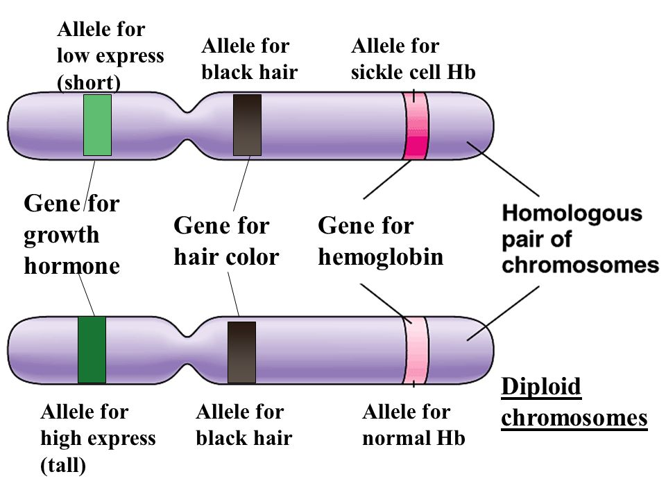 For Life To Exist The Information Genes Must Be Passed On Ppt