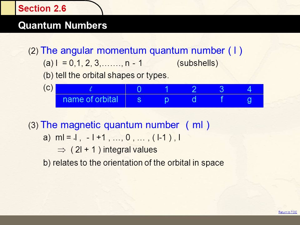 (2) The angular momentum quantum number ( l )