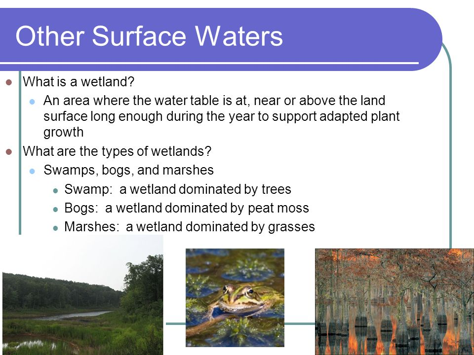 Other Surface Waters What is a wetland